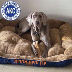 כלב גדול יושב על מיטה של AKC