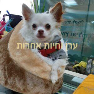 כלב קטן בתוך מיטה לכלבים