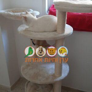 חתול יושב על מתקן גירוד לחתולים