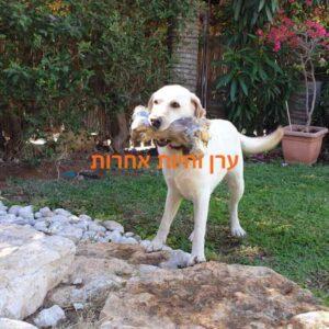 כלב מחזיק עצם לעיסה גדולה בפה