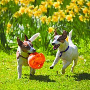כלבים משחקים בצעצוע של קונג