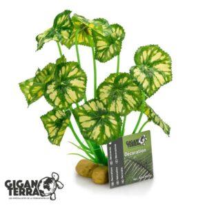 צמח לפלודריום עלים ירוקים צהובים