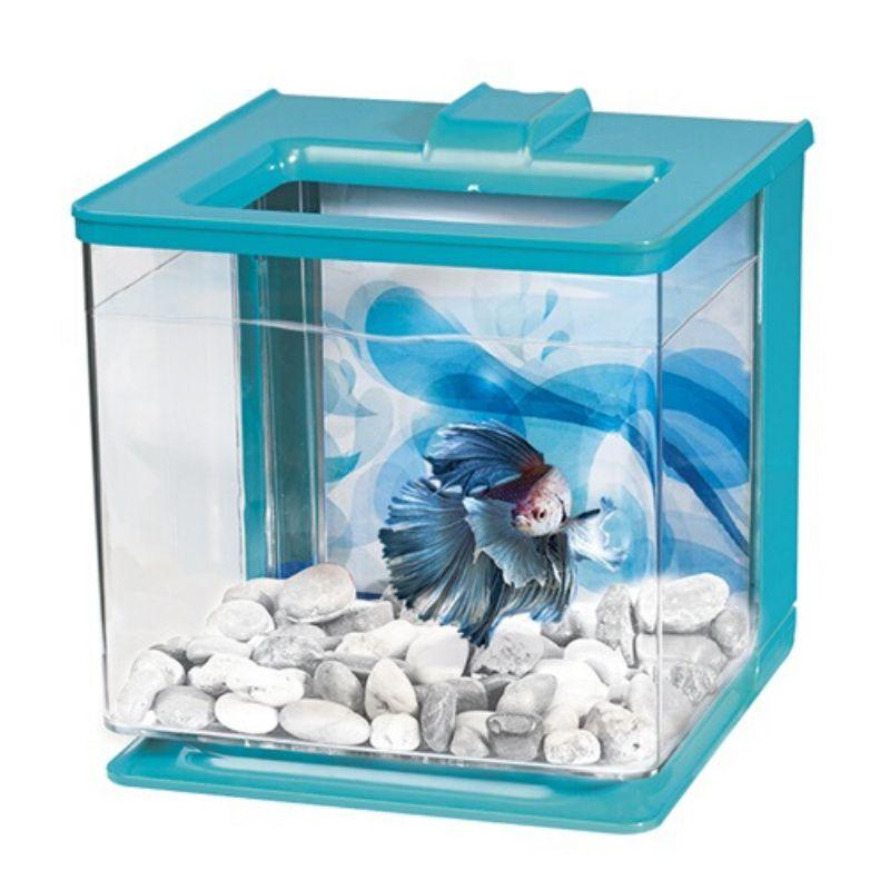 אקווריום משרדי קטן לדג קרב