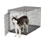 כלב האסקי בתוך כלוב רשת בינוני