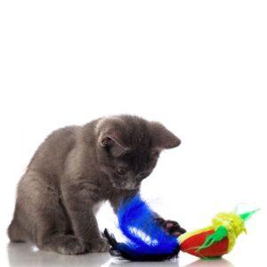 חתול משחק בצעצוע בובת ציפור