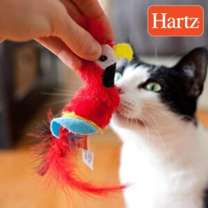 חתול מריח בובת משחק בצורת ציפור