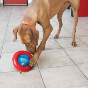 כלב משחק עם צעצוע קונג ג'יירו