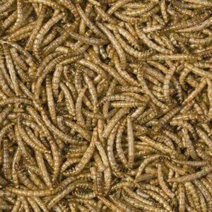 תולעים יבשות ללטאות ושממיות