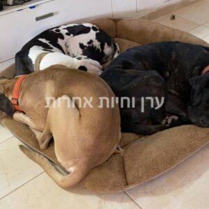 שלושה כלבים ישנים על מיטה גדולה לכלבים של איי קיי סי