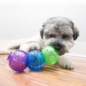 כלב משחק בצעצוע לוק איט של חברת קונג