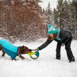 כלב משחק בשלג עם צעצוע משיכה של ראפוור