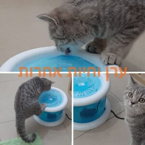 חתול שותה ממזרקת מים של טריקסי