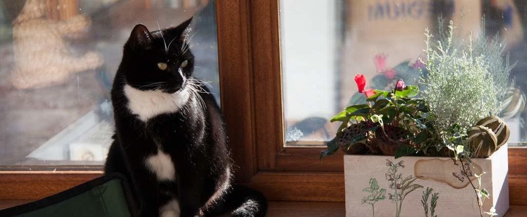 חתול בבית יושב על עדן החלון