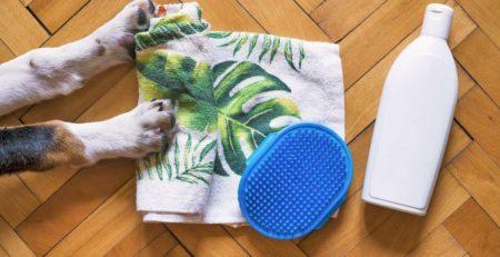 שמפו מסרק ומגבת לכלב