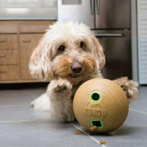 כלב משחק בצעצוע קונג במבו