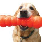 כלב עם צעצוע בפה