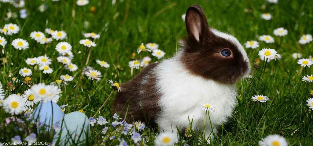 ארנב ננסי יושב על הדשא