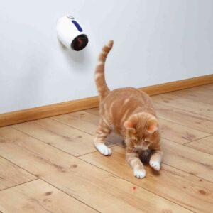 חתול ג'ינג'י רודף אחרי נקודת לייזר