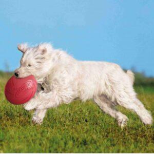 כלב רץ ולועס צלחת מעופפת של חברת טקריסי