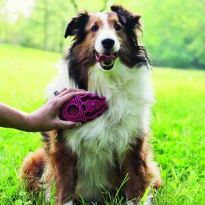 בחורה מברישה כלב עם מברשת של חברת קונג