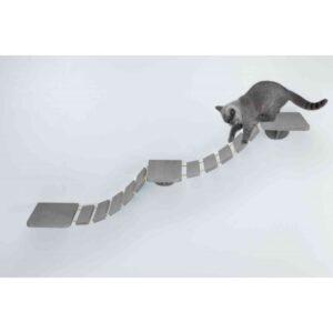 חתול בריטי הולך על סולם תלוי על הקיר