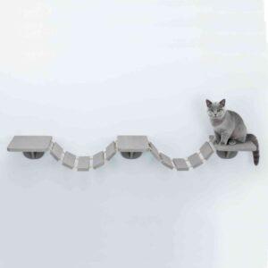 חתול בריטי יושב על סולם טיפוס צף