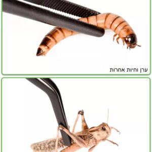 תפיסת חרקים במלקחיים להאכלת זוחלים