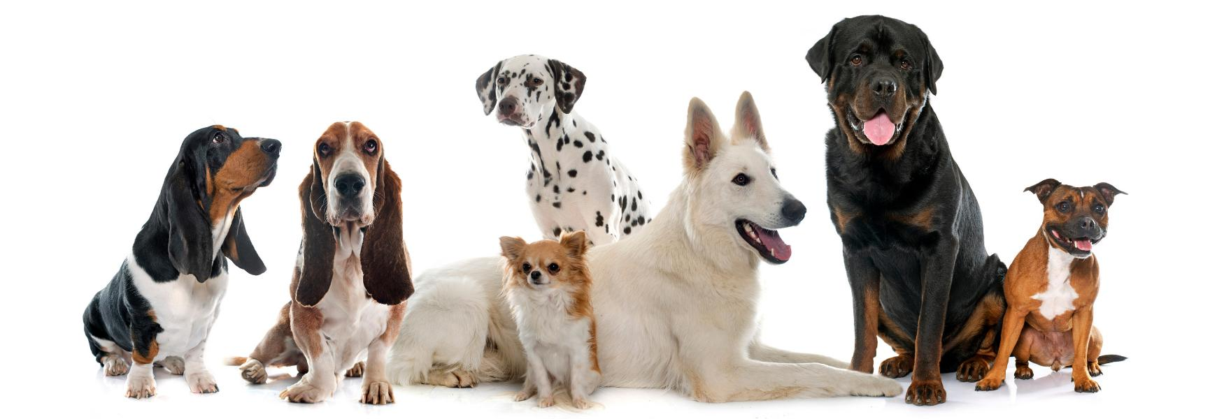 מוצרים לכלבים