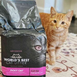 חתול ג'ינג'י מסתכל על מצע תירס של וורלדס בסט