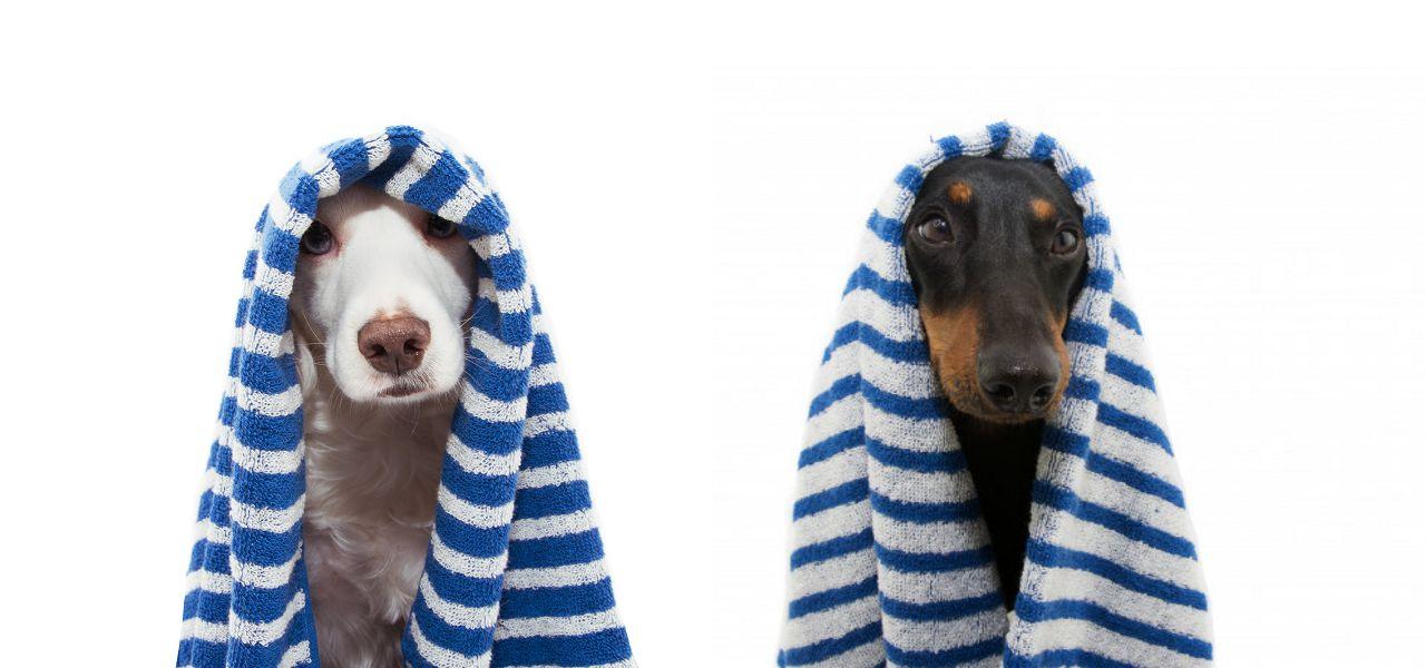 מוצרי היגיינה וטיפוח לכלבים