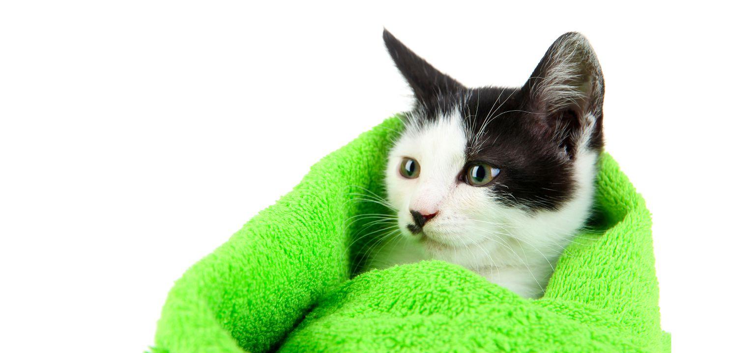 מוצרי היגיינה וטיפוח לחתולים